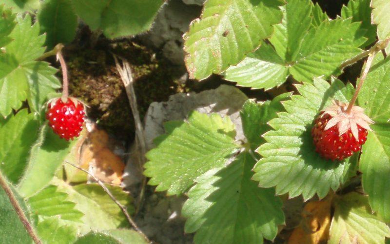 Fruits d'été bénfique pour la santé