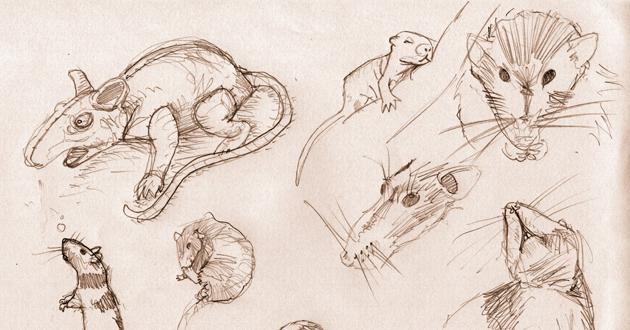 Les rats font preuve d'empathie… Eux aussi.