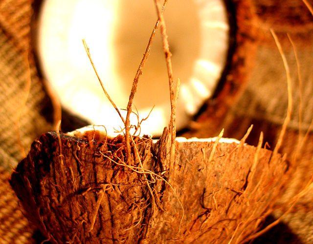 5 bonnes raisons pour consommer de la noix de coco