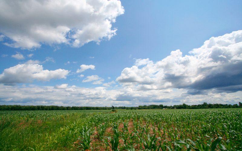 Plus de nutriments dans agriculture Bio